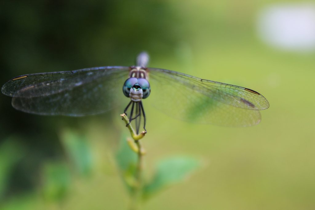 Dragonfly staring