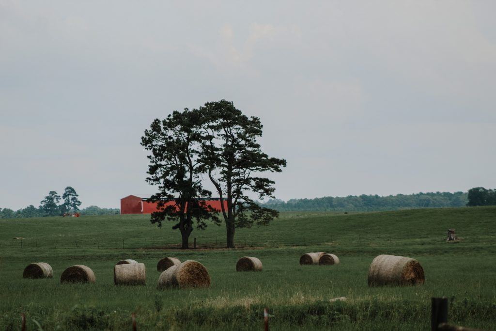 hay and red barn
