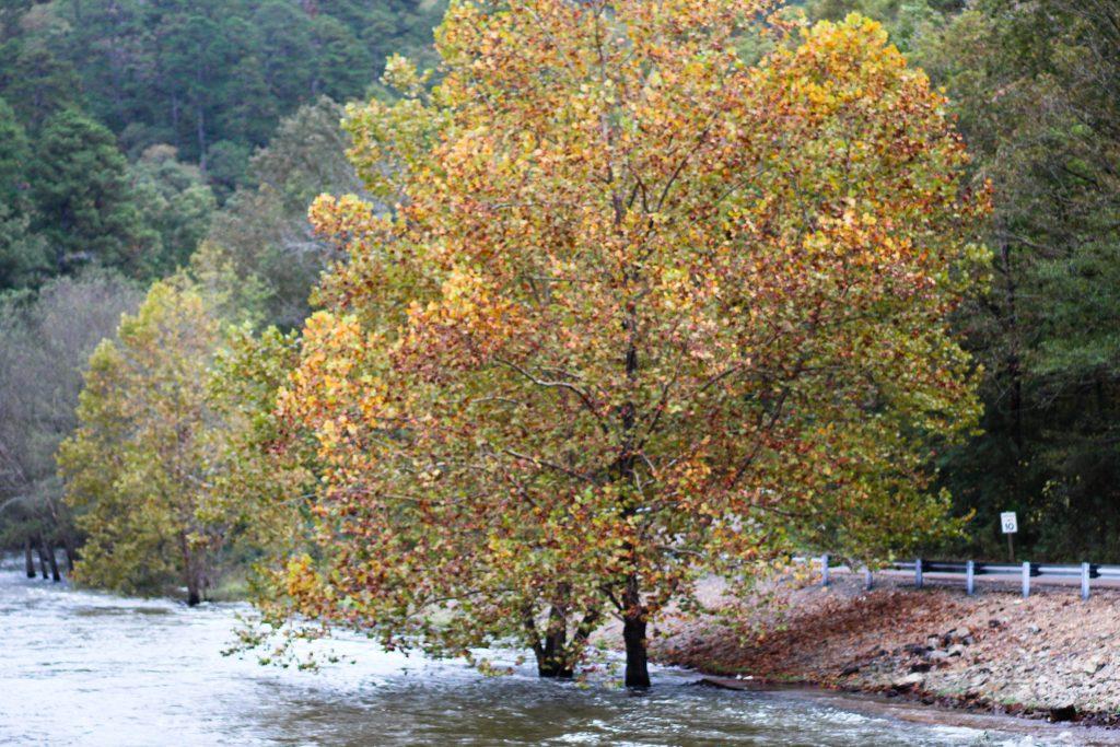 Fall colored tree