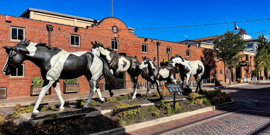 Trail of horses